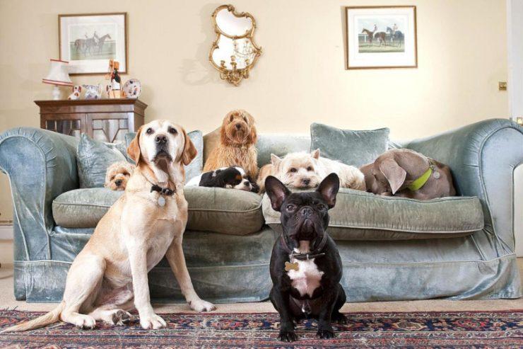 содержание домашних животных